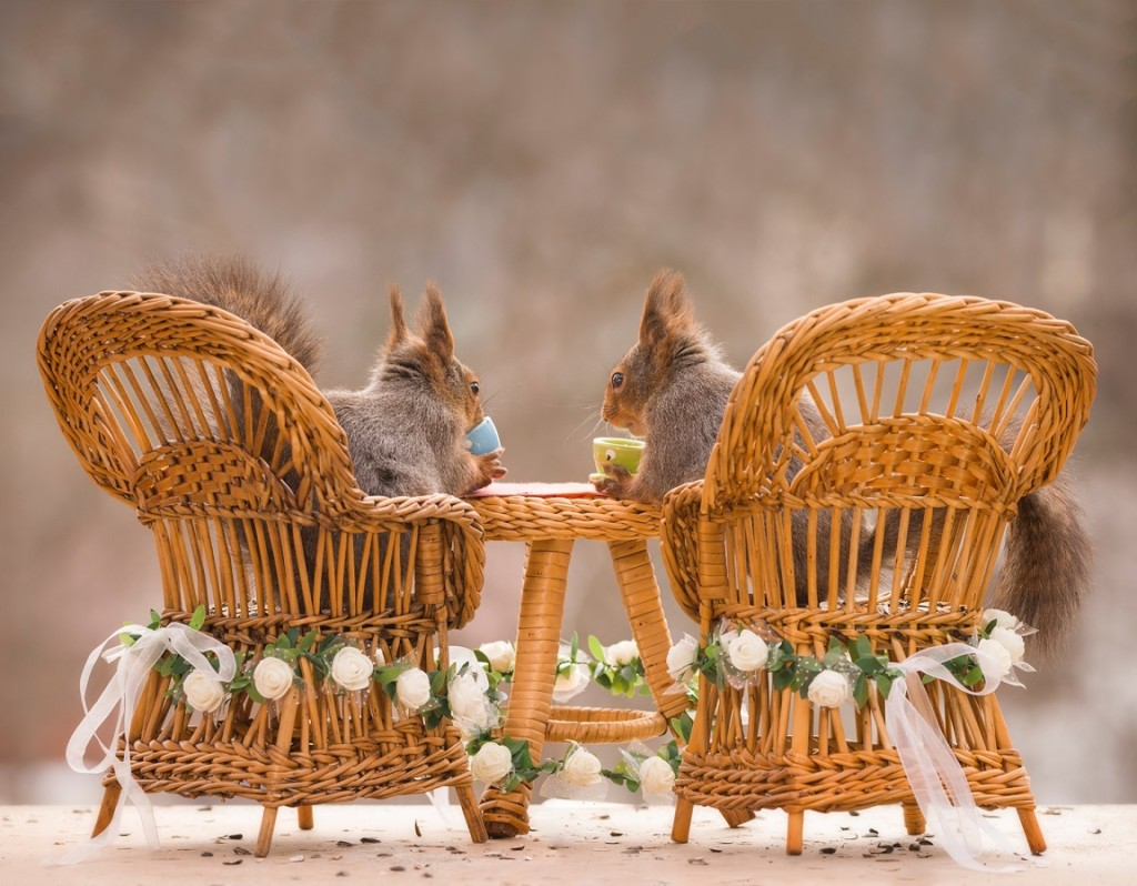 red squirrels on chairs with a wedding table