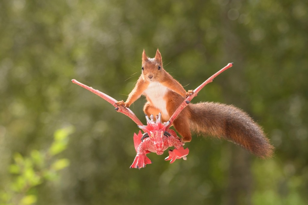 red squirrel sits on a flying dragon